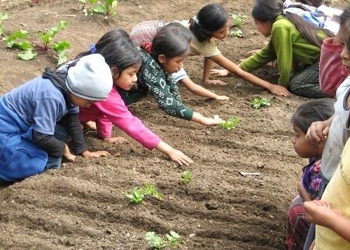 SDN 2 Taliwang Kembangkan School Garden